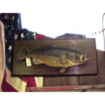 Taxidermied Bass Fish