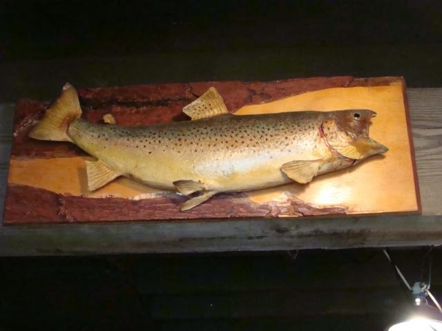 1920's Taxidermy Montana Rainbow Trout      Attached to hand-sawed tree board
