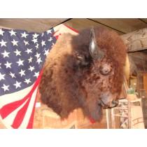 XXL Buffalo Shoulder Mount